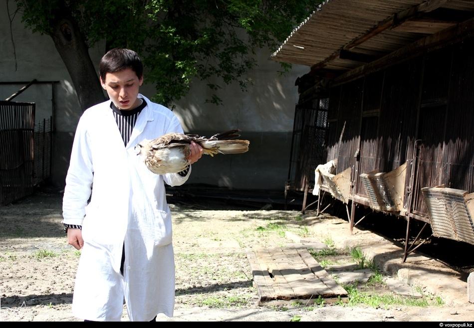 в руках ветеринара хищная птица