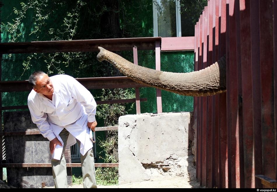 слоны приветствуют своего доктора