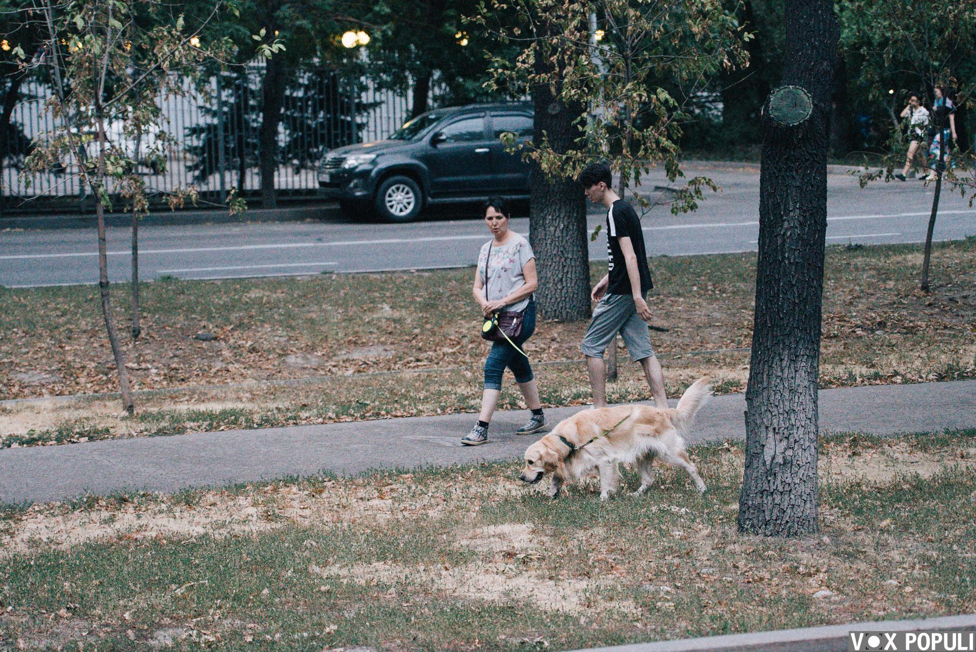 Собака на выгуле